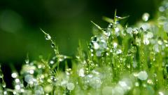 Dew Background 39907