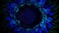 Exotic Flower Wallpaper 41129