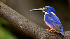 Fantastic Blue Bird Wallpaper 39975