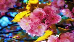 Fantastic Spring Background 19099