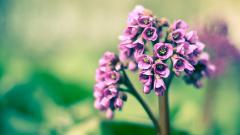 Flower Wallpaper Tumblr 17812