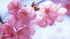 Flower Wallpaper Tumblr 17820