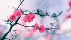 Flower Wallpapers 25385