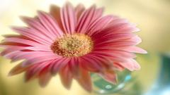 Flower Wallpapers 25387
