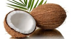 Free Coconut Wallpaper 41262
