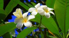 Free Exotic Flowers Wallpaper 41132