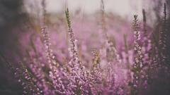 Free Macro Flowers Wallpaper 34738