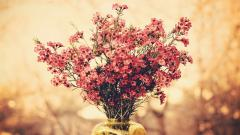 Free Macro Flowers Wallpaper 34750