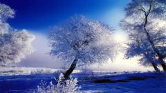 Free Winter Backgrounds 18545