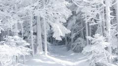 Harsh Winter Wallpaper 39847
