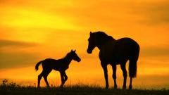Horse Wallpaper 4115