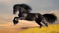 Horse Wallpaper 4116