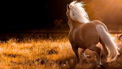 Horse Wallpaper 4118