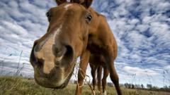 Horse Wallpaper 4119