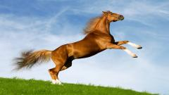 Horse Wallpaper 4121