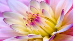 Lovely Flower Wallpapers 25384