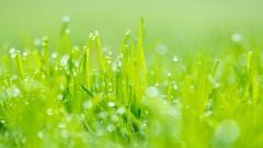 Lovely Grass Wallpaper 42333