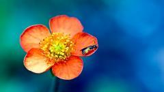 Macro Flower 34749
