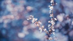 Macro Flower 34758