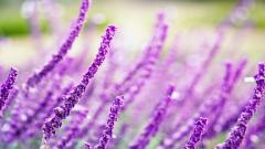Macro Flowers 34747