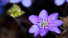 Macro Flowers 34748