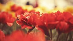 Macro Flowers 34756