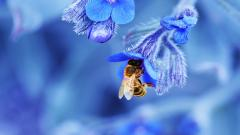 Macro Flowers Background 34743