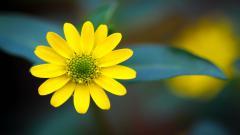 Macro Flowers HD 34739