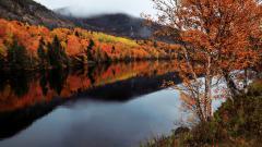Newfoundland Wallpaper 37528