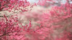 Pink Flower Wallpaper Tumblr 17813