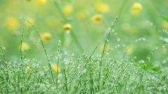 Pretty Dew Wallpaper 39904