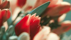 Pretty Exotic Flowers Wallpaper 41134