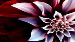 Pretty Flower Wallpapers 25383