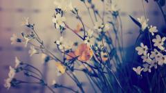 Pretty Macro Flowers 34755