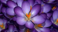 Purple Flower Wallpaper Tumblr 17818