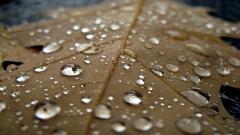 Raindrops HD 39885