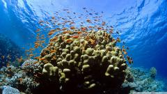 Reef Wallpaper 4498