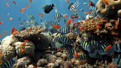Reef Wallpaper 4504