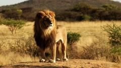 Savannah Desert Animals 21128
