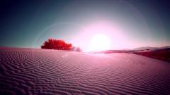 Savannah Desert Wallpaper 21117