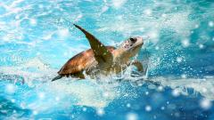 Sea Turtle Wallpaper 4514
