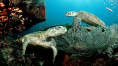 Sea Turtle Wallpaper 4515