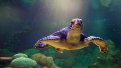 Sea Turtle Wallpaper 4520