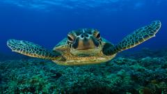 Sea Turtle Wallpaper 4522