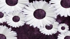 Tumblr Flower Backgrounds 16950