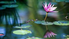 Water Flower Wallpapers 37545