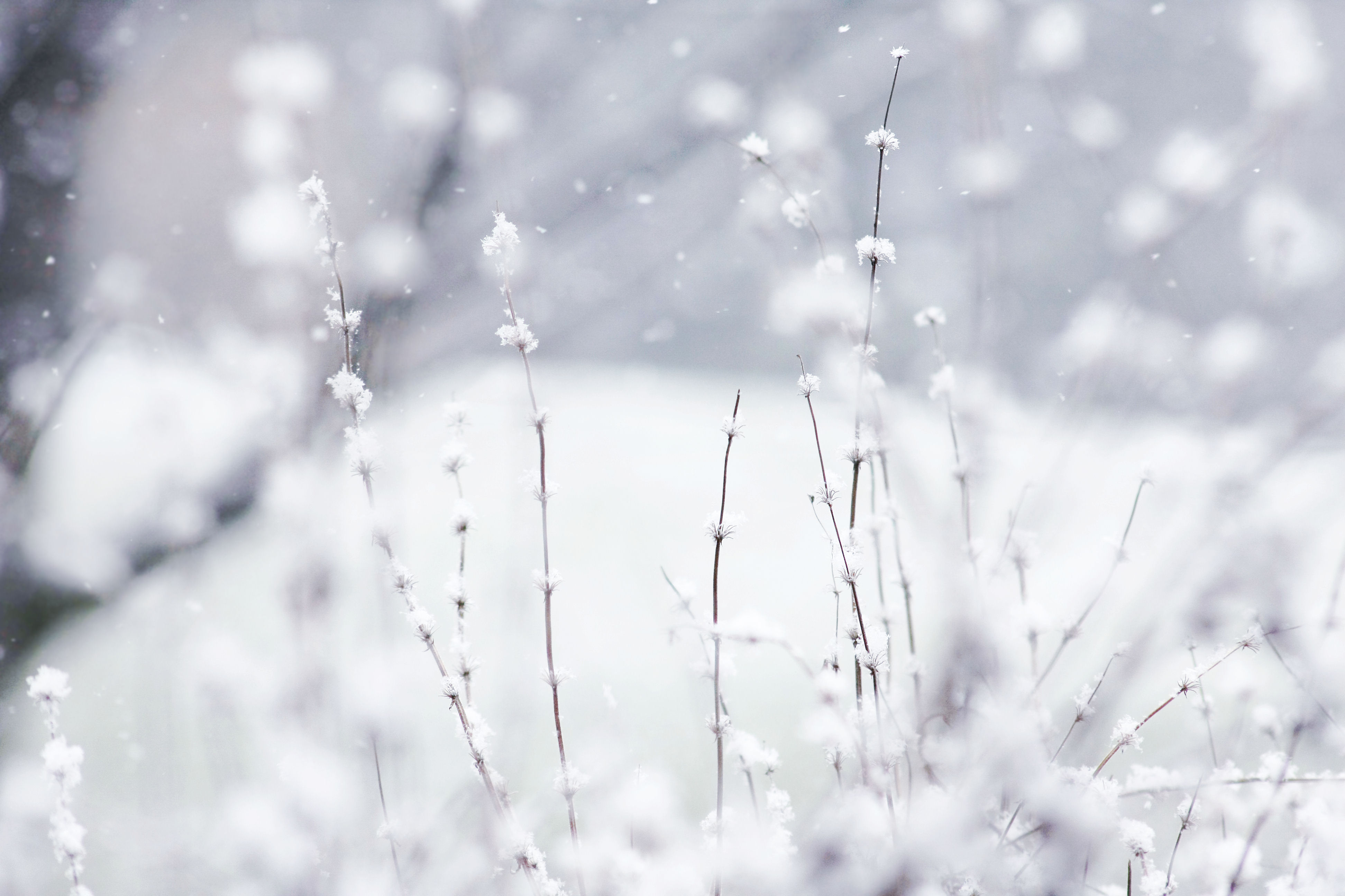 Winter Backgrounds You Can Download Free
