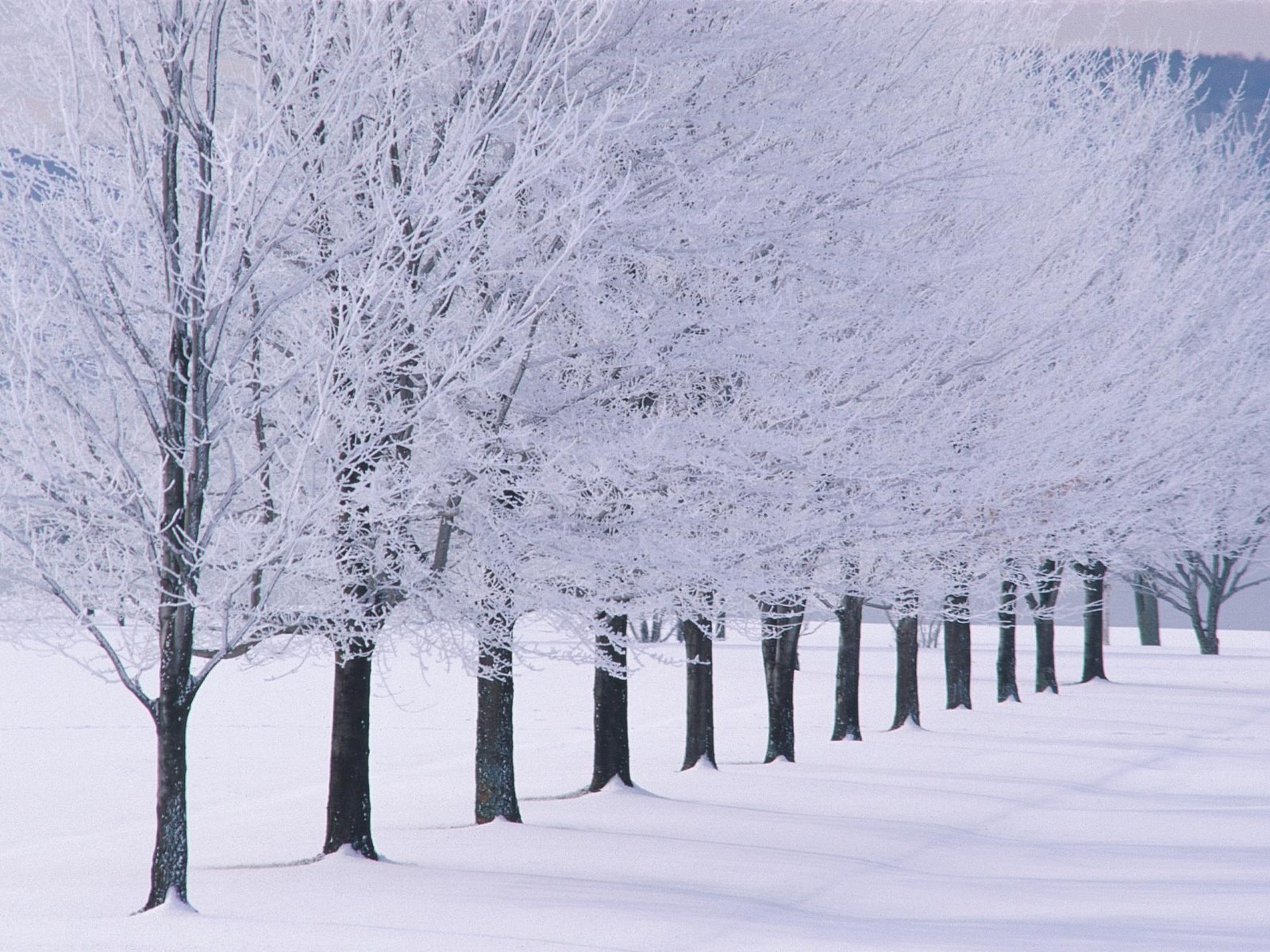 winter backgrounds 18554