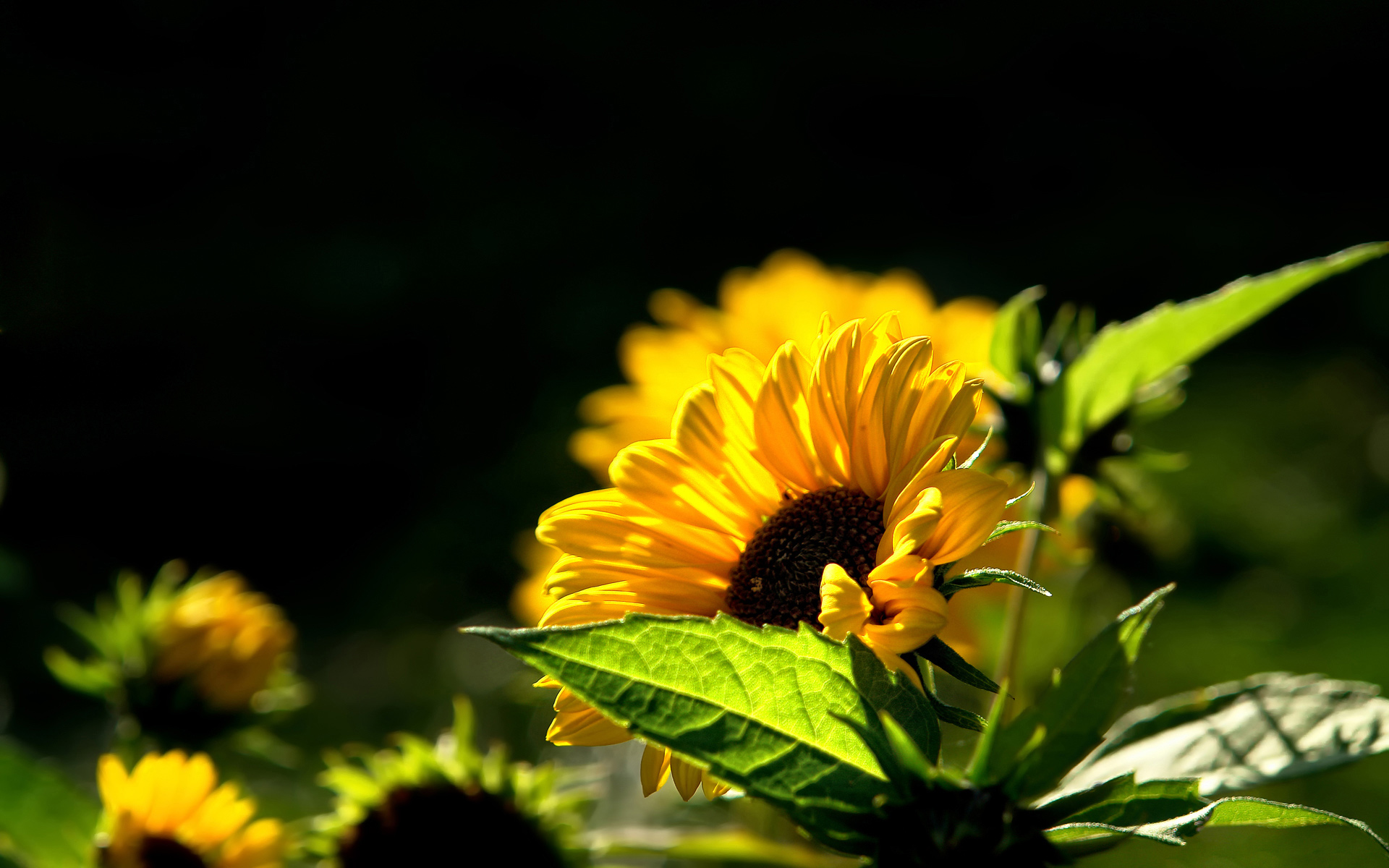 yellow flower wallpapers 25401