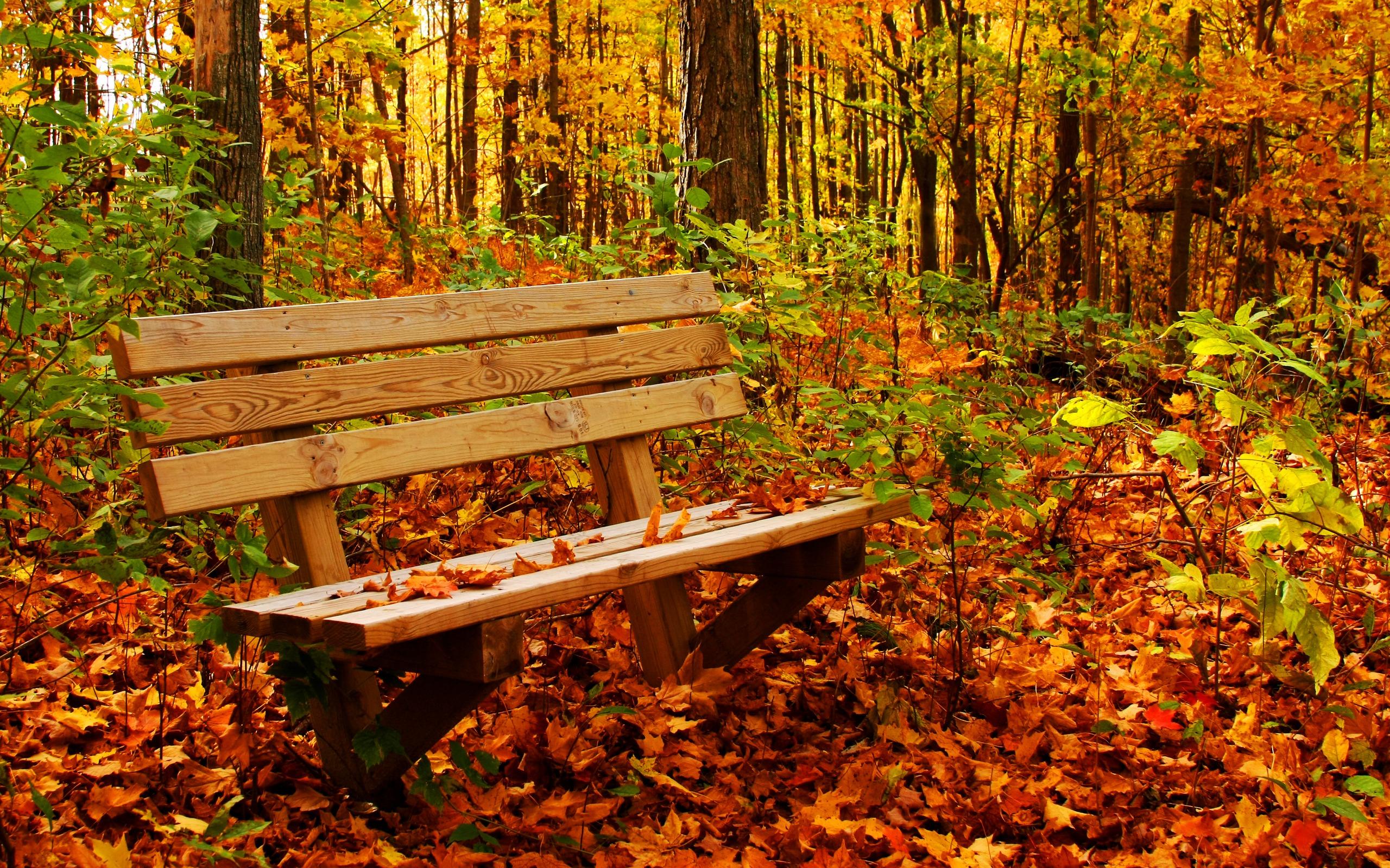 Осень листья лавка стол  № 3187448 без смс